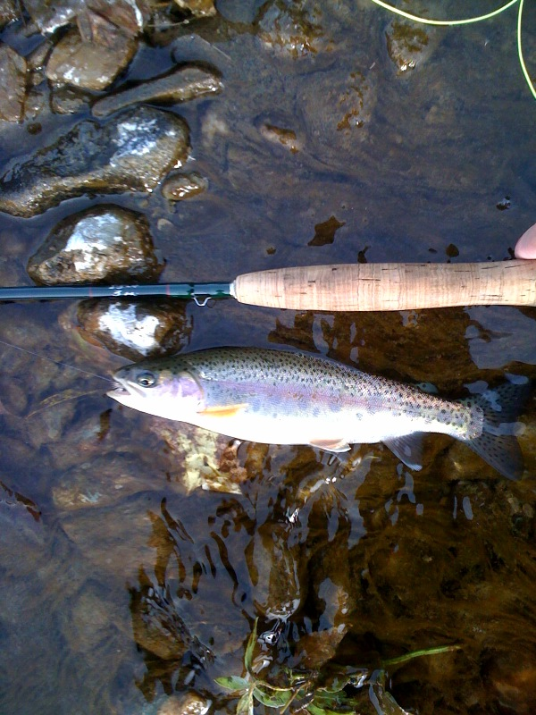 Nothing Better Than Wild Vermont Rainbow Trout